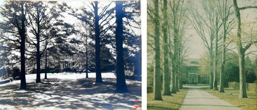 two photographs of the straight treelined driveway leading up to a house